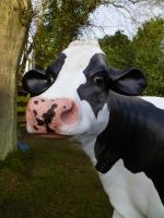 cow-model-080