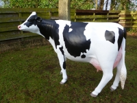 cow-model-084